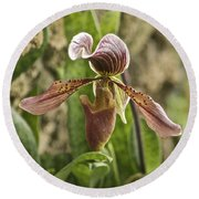 Lady Slipper 2 Round Beach Towel