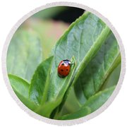 Ladybug On A Plant Leaf Round Beach Towel