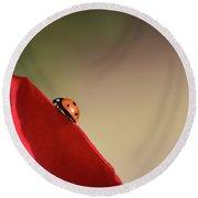 Ladybug On A Rose  Round Beach Towel