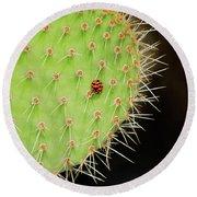 Ladybug On Cactus Round Beach Towel