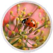 Ladybug On Fennel Round Beach Towel