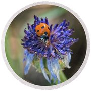 Ladybug On Purple Flower Round Beach Towel