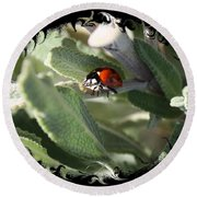 Ladybug On Sage With Swirly Framing Round Beach Towel