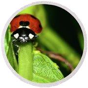Ladybug Round Beach Towel