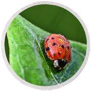 Ladybug With Dew Drops Round Beach Towel