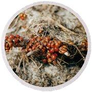 Ladybugs En Masse Round Beach Towel