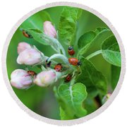 Ladybugs On Apple Blossoms Round Beach Towel