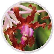 Laelia Undulata Orchid Round Beach Towel