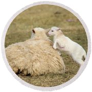 Lamb Jumping On Mom Round Beach Towel