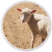 Lamb Looking Cute. Round Beach Towel