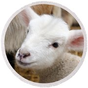 Lamb Round Beach Towel by Michelle Calkins