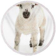 Lamb Standing Round Beach Towel