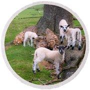 Lambs Round Beach Towel