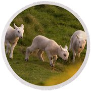 Lambs On The Meadow Round Beach Towel
