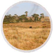 Landscape With Cows Grazing In The Field . 7d9957 Round Beach Towel