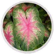 Large Coleus Plant Round Beach Towel