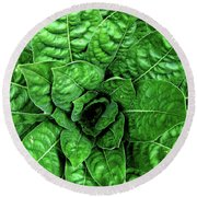 Large Green Display Of Concentric Leaves Round Beach Towel