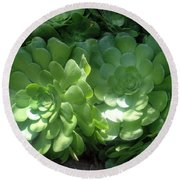 Large Green Succulent Plants Round Beach Towel