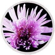 Large Purple Chrysanthemum-1 Round Beach Towel