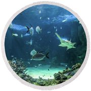 Large Sawfish And Other Fishes Swimming In A Large Aquarium Round Beach Towel