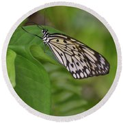 Large White Tree Nymph Butterfly On Green Foliage Round Beach Towel