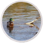 Last Mallard Of Autumn         October       Indiana    Round Beach Towel