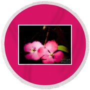 Last Of The Pink Dianthus Flowers Round Beach Towel