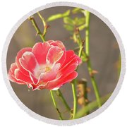 Late Beauty Between Thorns Round Beach Towel