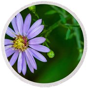Late Purple Aster Round Beach Towel