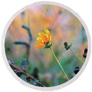Late Summer Rain From The Forest Floor Round Beach Towel