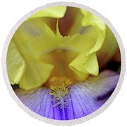 Lavender And Yellow Iris Heart Round Beach Towel