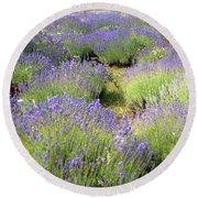 Lavender Field, Tihany, Hungary Round Beach Towel