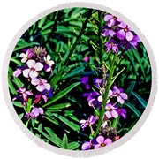 Verbena At Pilgrim Place In Claremont-california   Round Beach Towel