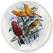 Laysan Honeycreeper Round Beach Towel