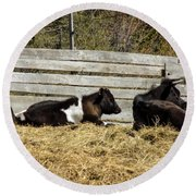 Lazy Cows And Weathered Wood Round Beach Towel