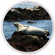 Lazy Seal Round Beach Towel