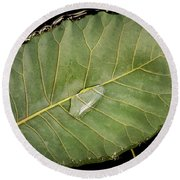 Leaf And Water Round Beach Towel