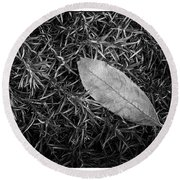 Leaf In Phlox Nature Photograph Round Beach Towel