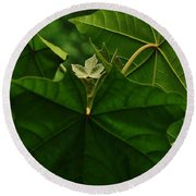 Leaf In The Middle Round Beach Towel