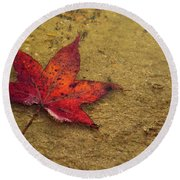 Leaf In The Rain Nature Photograph Round Beach Towel