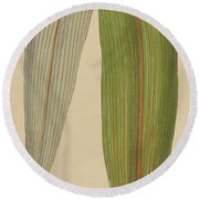 Leaf Of A Mountain Cabbage Tree Or Bush Flax Round Beach Towel