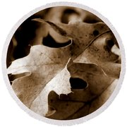 Leaf Study In Sepia IIi Round Beach Towel