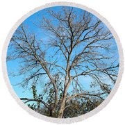 Leafless In Autumn Round Beach Towel