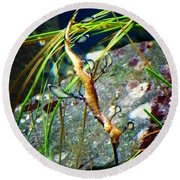 Leafy Sea Dragon  Round Beach Towel