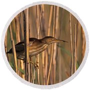 Least Bittern Round Beach Towel