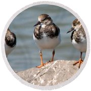 Least Sandpipers Round Beach Towel