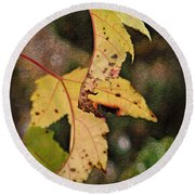 Leaves And Autumn Round Beach Towel