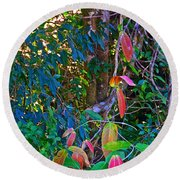 Leaves Changing Color As Autumn Approaches In Iguazu Falls National Park-argentina   Round Beach Towel