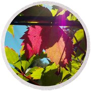Leaves In Sunlight 6 Round Beach Towel