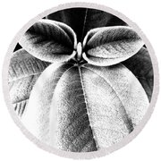Leaves No. 36 Round Beach Towel